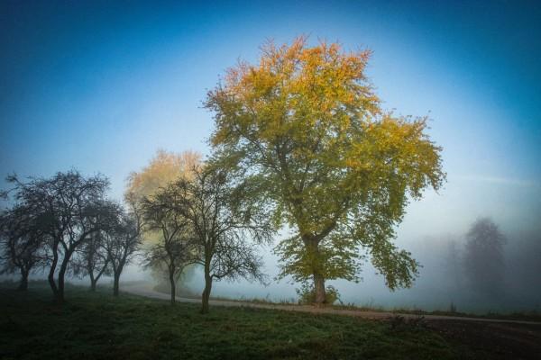 Wandbild Morgenstimmung Nebel im Hirschberger Tal (Motiv JR12)