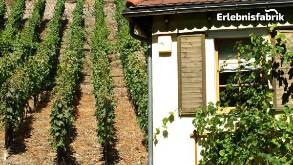 Weinzeit entlang der Elbe – Ausflug im Oldiebus